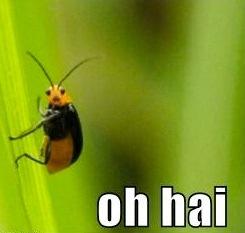 Bug Waving Oh Hai!