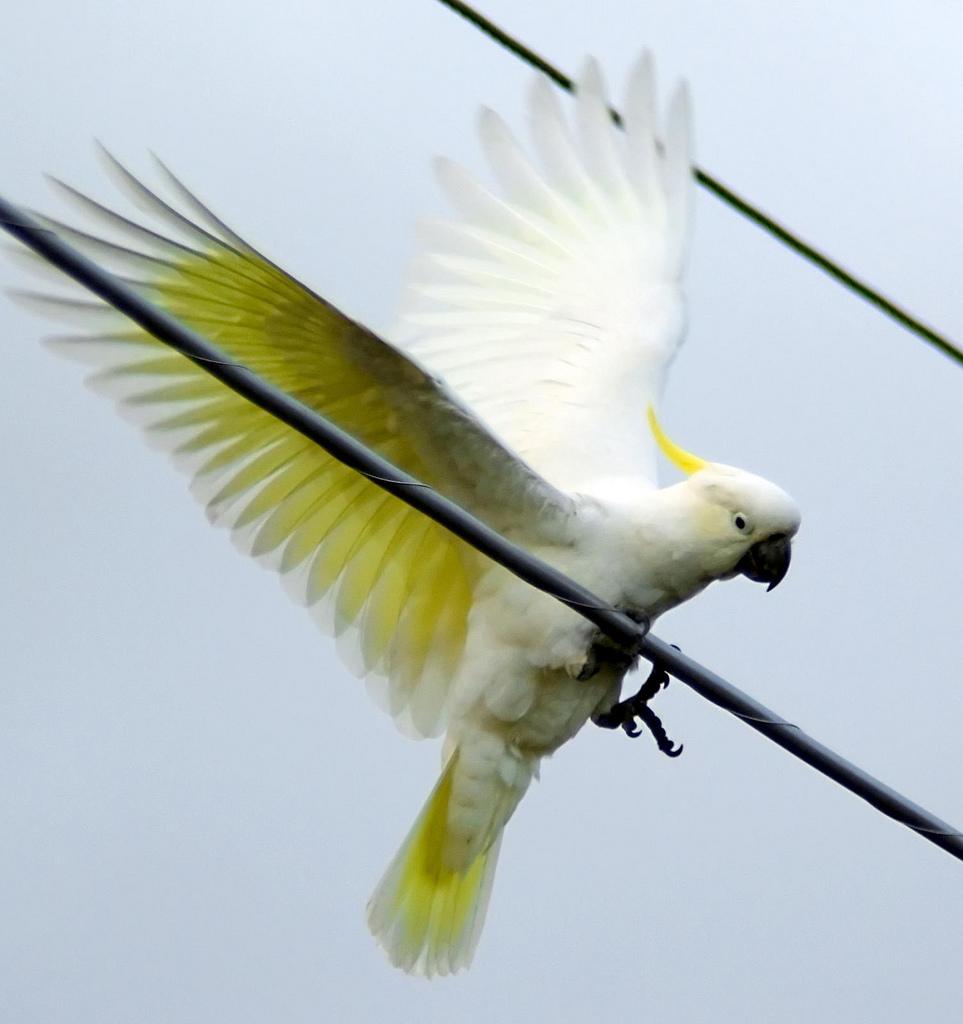 Electric Landing: flickr user Paul Hocksenar